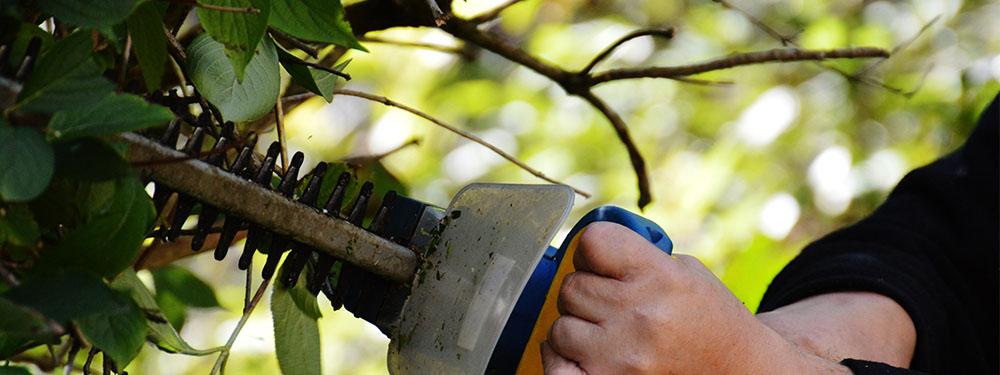 Photo d'une main tenant une scie en train de découper des branches d'arbres