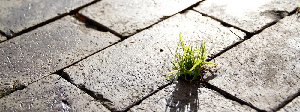 Photo d'une plante verte poussant entre 2 pavés de rue