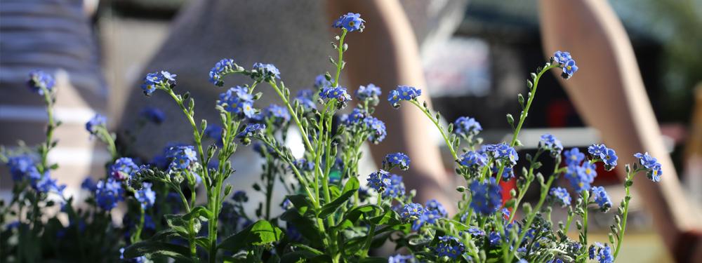 Photo d'une femme en train de jardiner