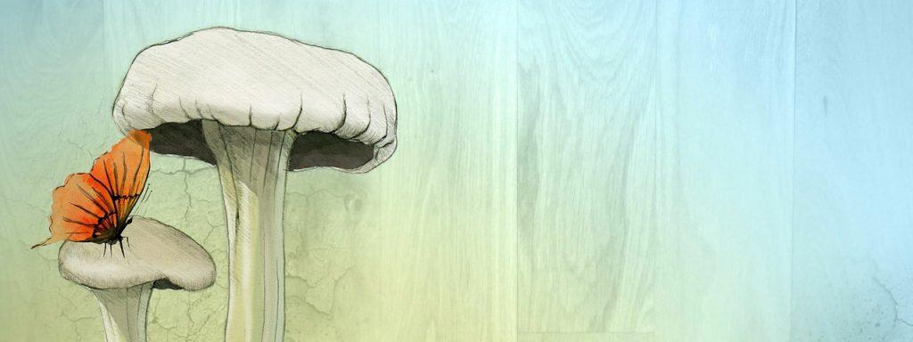 illustration figurant un papillon sur un champignon