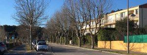 Photo d'une rue venelloise bordée de platanes