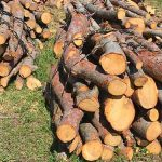 Photo de fagots de bois posés sur le sol