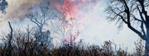Photo d'une forêt en feu