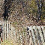 Photo d'un chasseur marchant dans la forêt