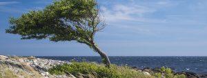 Photo d'un arbre au bord de la mer en plein vent