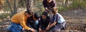 Groupe d'enfants en train de planter un arbre en forêt