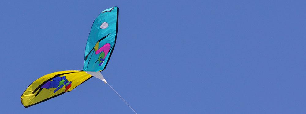Photo d'un cerf volant