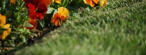 Photo d'un jardin