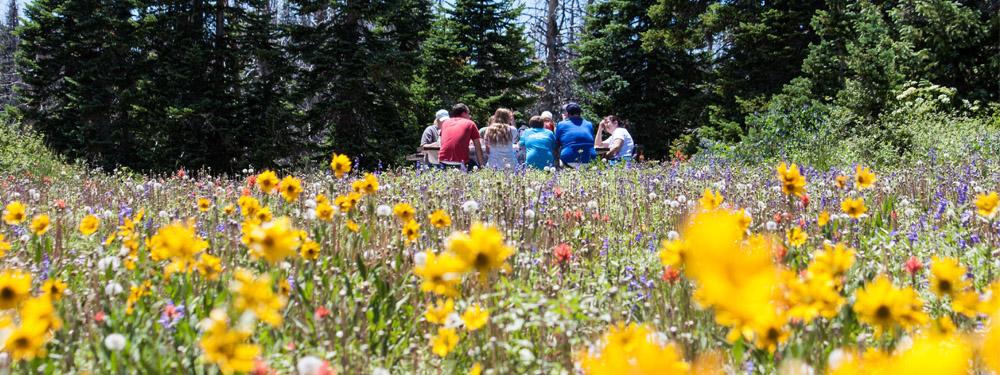 Photo d'un groupe de personnes en train de pique niquer dans un champs