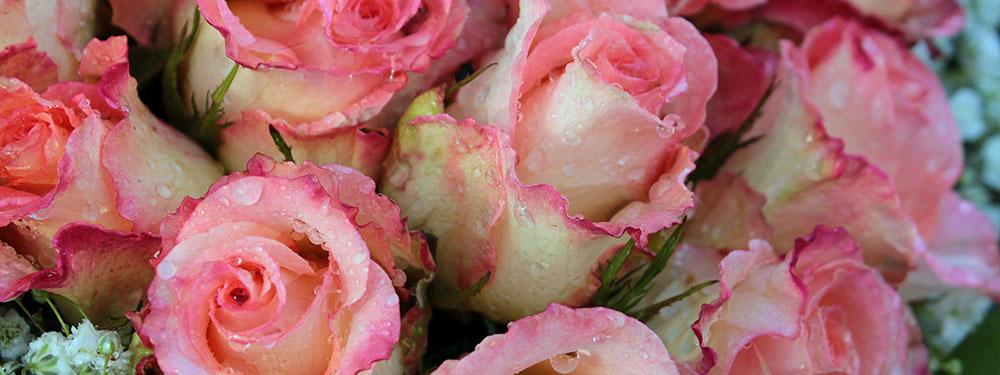 Photo d'un bouquet de roses roses avec des gouttes d'eau dessus
