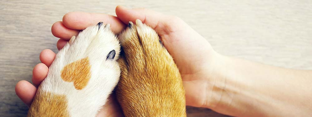 Photo de pates de chien posées dans les mains de son maître