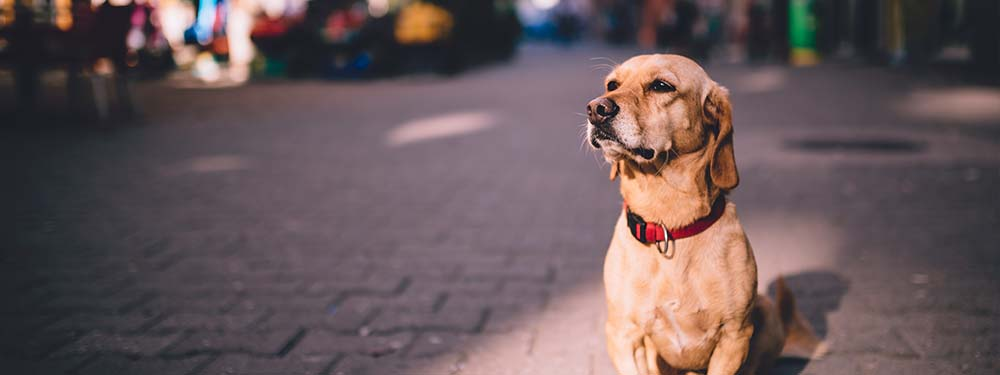 Photo d'un chien assis dans la rue