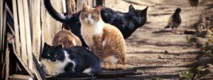 Photo de chats errants
