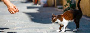 Photo d'un chat dans la rue avec une main qui lui donne à manger