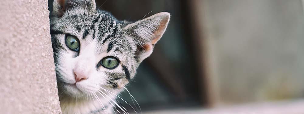 Photo de la tête d'un chat