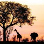Photo d'un paysage africain avec couché de soleil, animaux et arbres