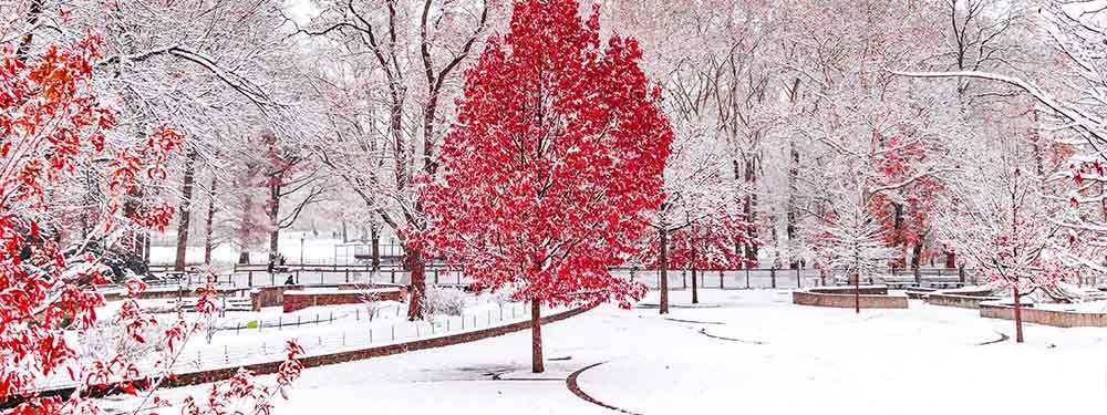Photo d'un paysage avec des arbres rougeâtres dans un parc sous la neige