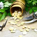Photo montrant un établi sur lequel est posé un rateau, un sécateur, des fleurs et un pot de graines