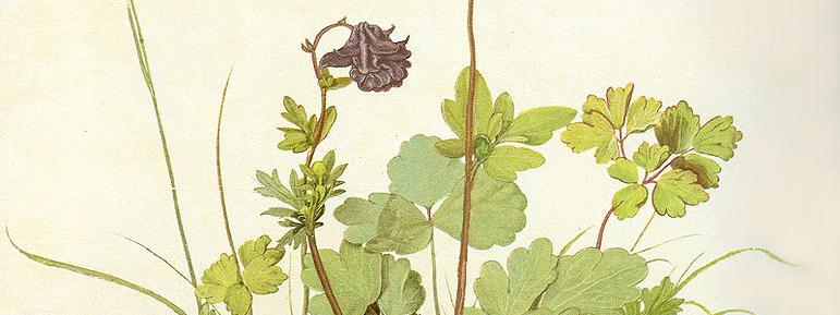Illustration représentant une esquisse de plante verte