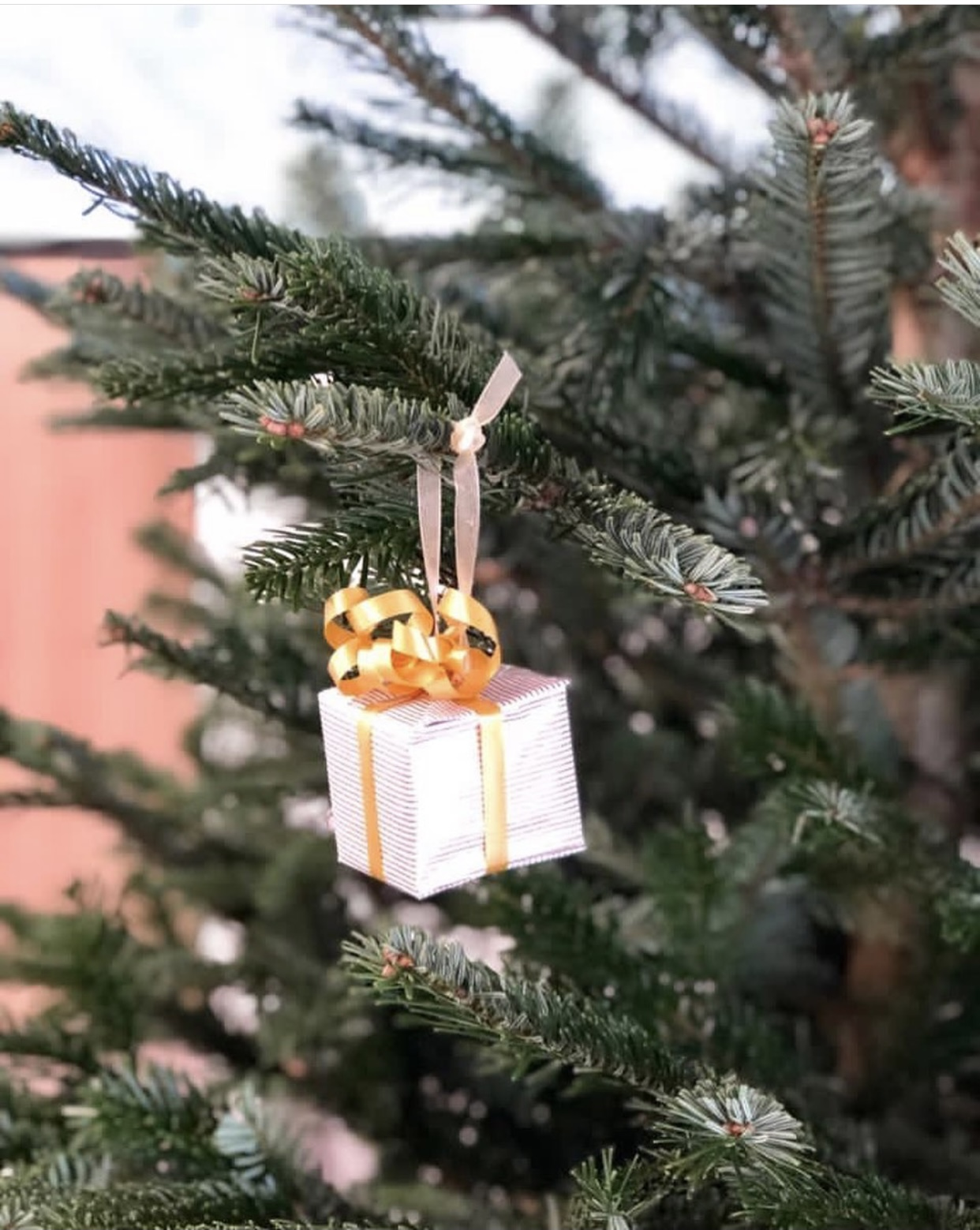 Photo d'un cadeau déposé sur le sapin de Noël de la mairie