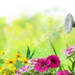 Photo d'une arrosoir en train d'arroser des fleurs dans un jardin