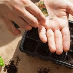 Photo d'un homme en train de planter des semis