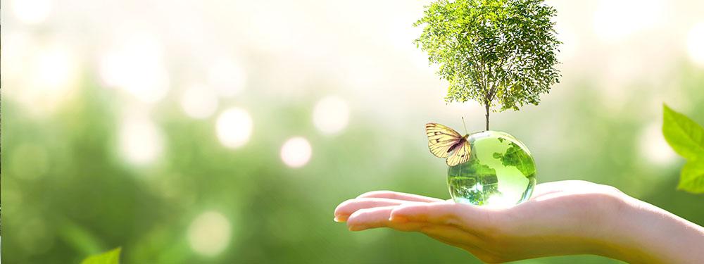 Photo d'une main tendue tenant une bulle avec un arbre et un papillon