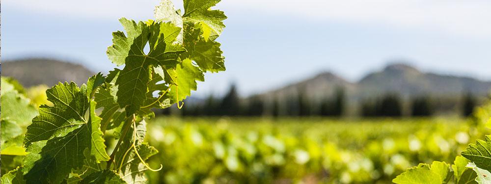 Photo de paysages de vignes
