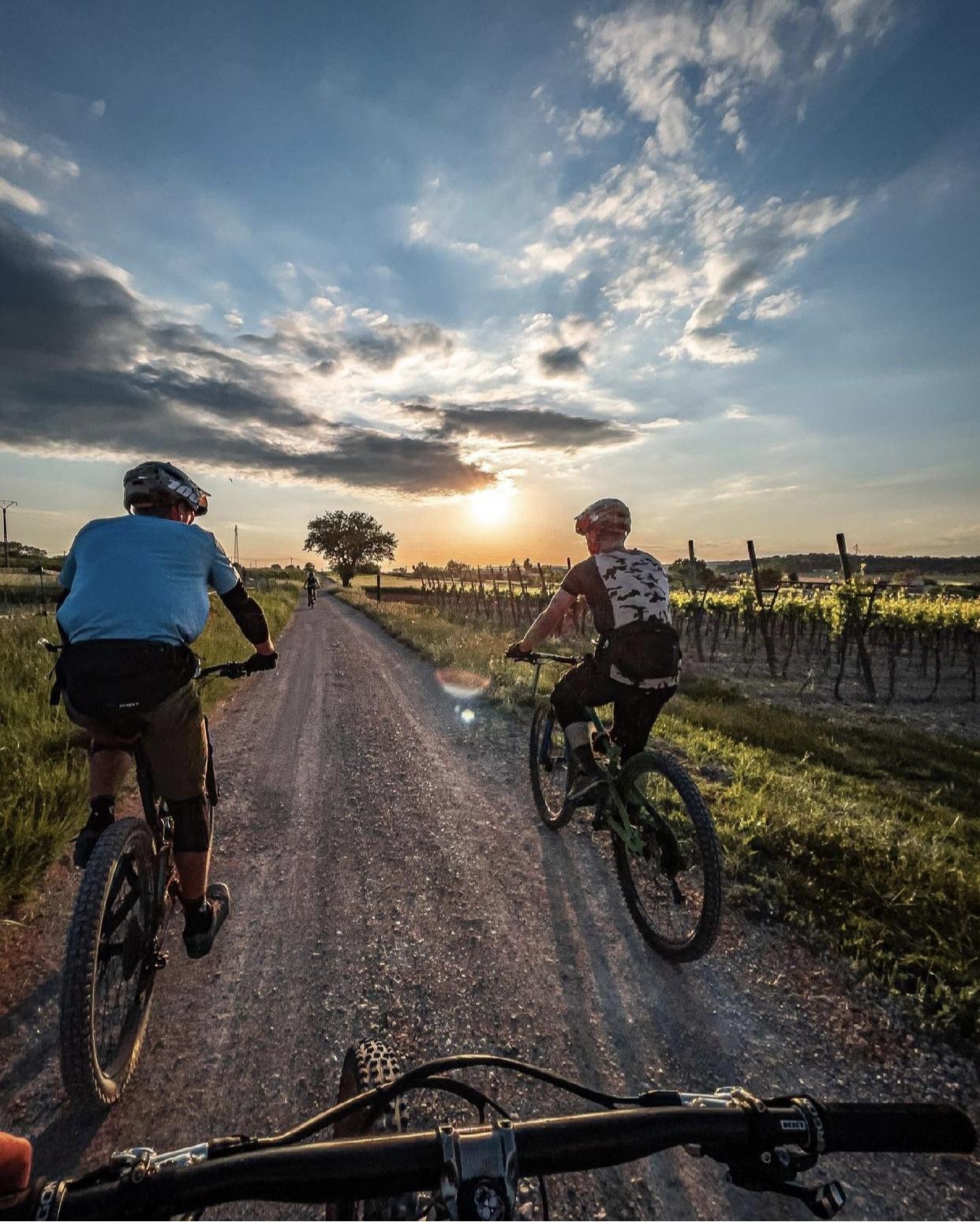 Photo montrant des vététistes en train de parcourir les chemins bordés de vignes de la ville de Venelles