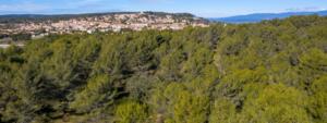 Vue aérienne de la forêt venelloise